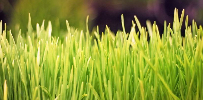 Новруз — праздник прихода весны