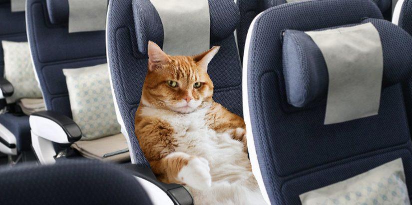 S7 разрешил перевозить питомцев на сиденье в салоне