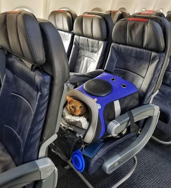 jackson_galaxy_travel_cat_backpack_on_airplane